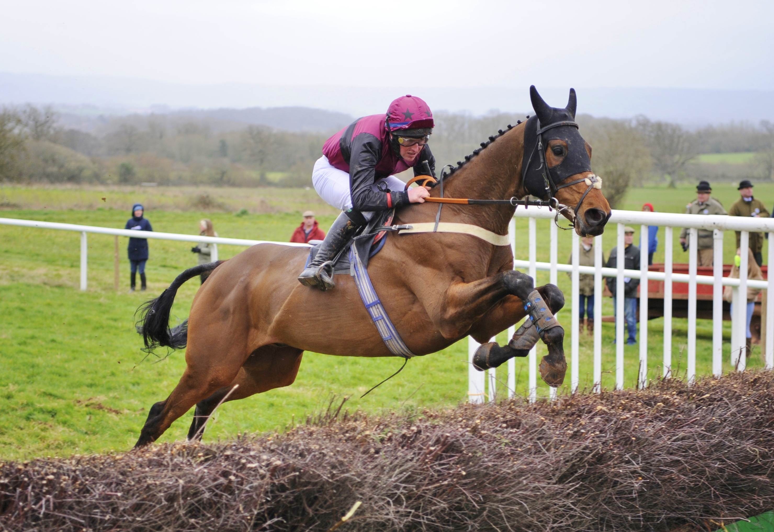 Harriet Brown Point to Point Trainer